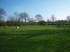 field-2nd-view-opt-640.jpg