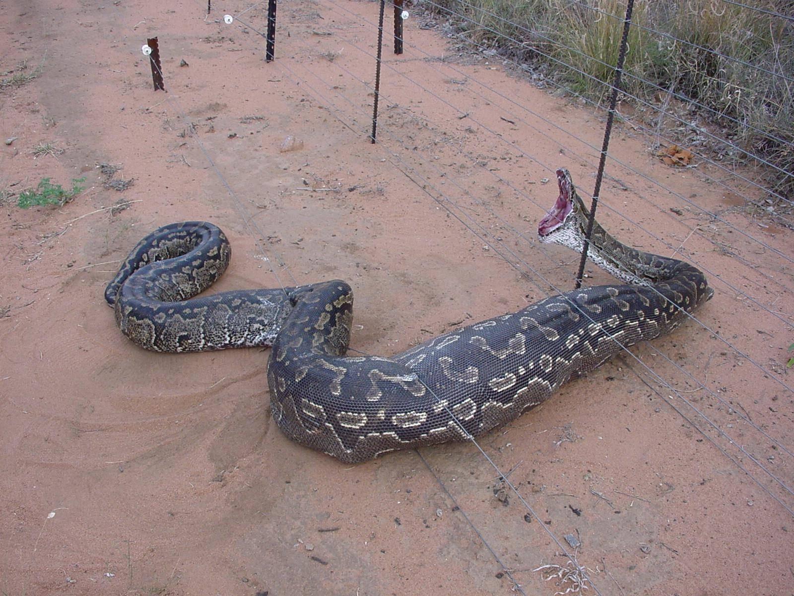 big ass snake - british expats
