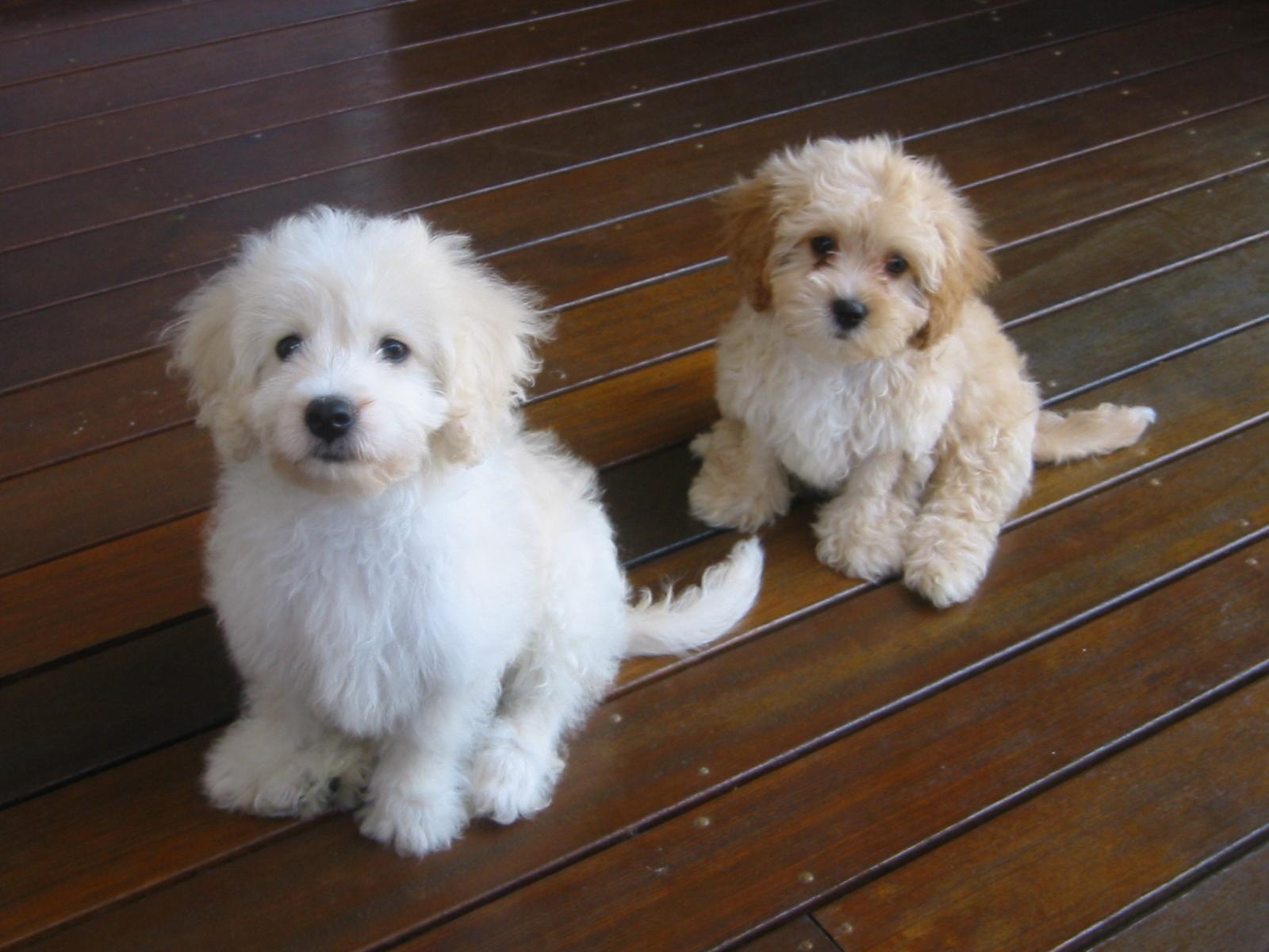 Dog Breeders Qld Australia Fun Dog Training System