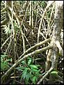 Cairns meet during Easter 2008-p1060216.jpg