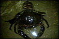 ID this?-vlcsnap-2010-04-13-21h29m32s175.png