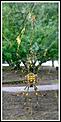 Spider photo's-spd.png