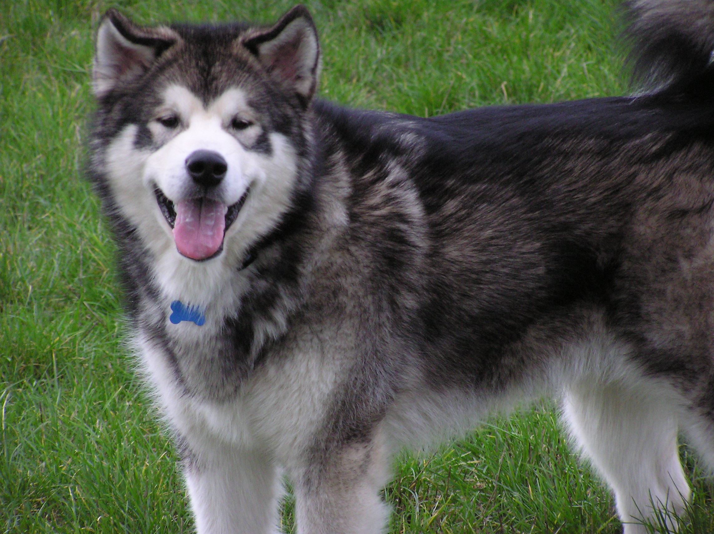 how to find a dog breeder calgary