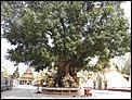 An eight day tour around Myanmar-bhodi-tree.jpg