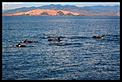 Whale spotting-whales-1.jpg