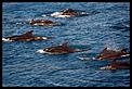 Whale spotting-whales-2.jpg