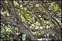 Balinese Birds-bali-4.jpg