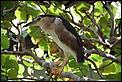 Balinese Birds-bali-6.jpg