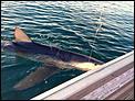 Sharks at Peka Peka Beach, Kapiti-11001817_10204649069439773_4770121036714861339_n.jpg