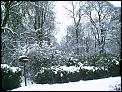 and now its snow time-sues-garden-2.jpg