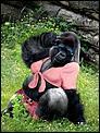 UK Trip-gorilla.jpg