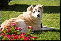Pet Cemetary-20120310-_mg_1059.jpg