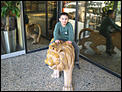Did anyone see that Lion loose in JBR?-pizza-hut-lion-14.vga.jpg
