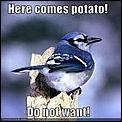 Spanking the potato-potato-meme.jpg