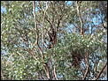 A year in Hinsight (B'ham to Adelaide and back again)-koala-out-front.jpg