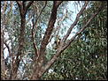 A year in Hinsight (B'ham to Adelaide and back again)-koala-out-front-door.jpg